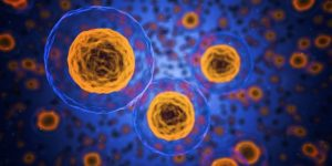 HIPPOCRATE - Cellules souches